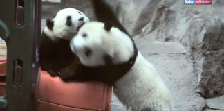 Орел и Решка 3 сезон - Пекин (Китай)