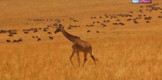 Орел и Решка - 4 сезон - Найроби (Кения)