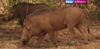 Орел и Решка - Дакар (Африка)