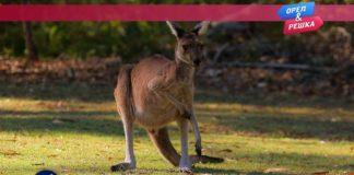 Орел и Решка: Морской сезон - Западная Австралия