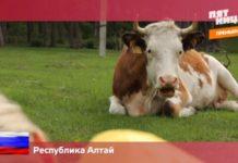 Орел и Решка: Россия - Алтай (12 выпуск)