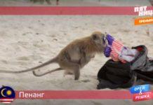 Орел и Решка: Морской сезон - Пинанг / Малайзия (17 сезон 23 серия)