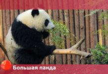 Орел и Решка: Чудеса света - Большая панда (22 сезон 12 выпуск)